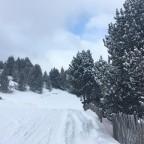 Gall de Bosc