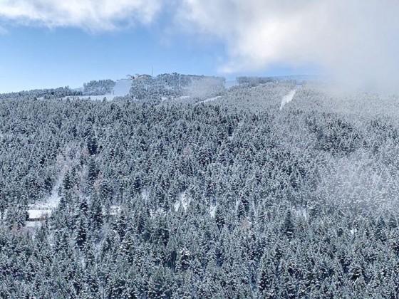 Snowy trees in Soldeu