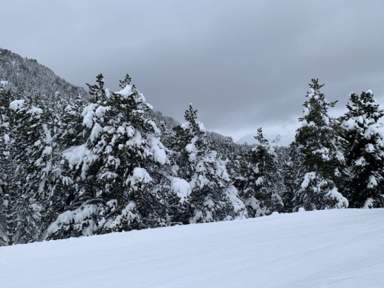 Snow covered trees on Esquirol blue run
