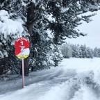 Red Salvans run on Powder Day - knee deep snow!