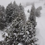 Snow covered trees in Grandvalira Soldeu