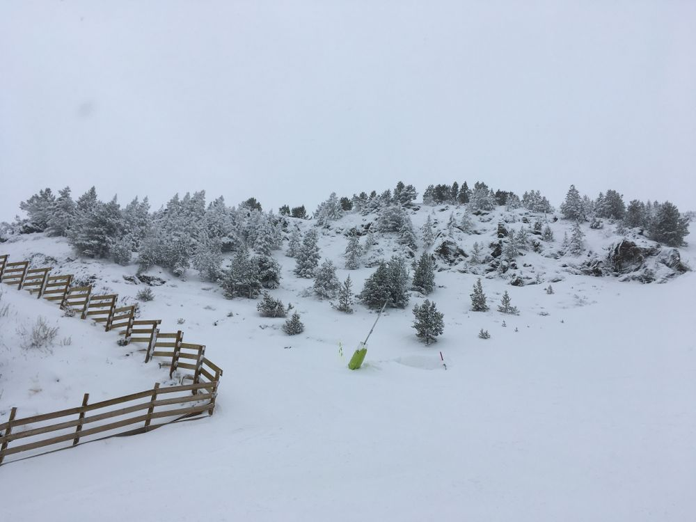 Snow covered trees on powder day