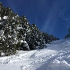 Off piste riding through the trees after heavy snowfall in Canillo