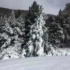 Light dusting of trees along Rossinyol blue run