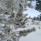 A few cm of fresh snow in Tarter