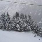 Tree lined run