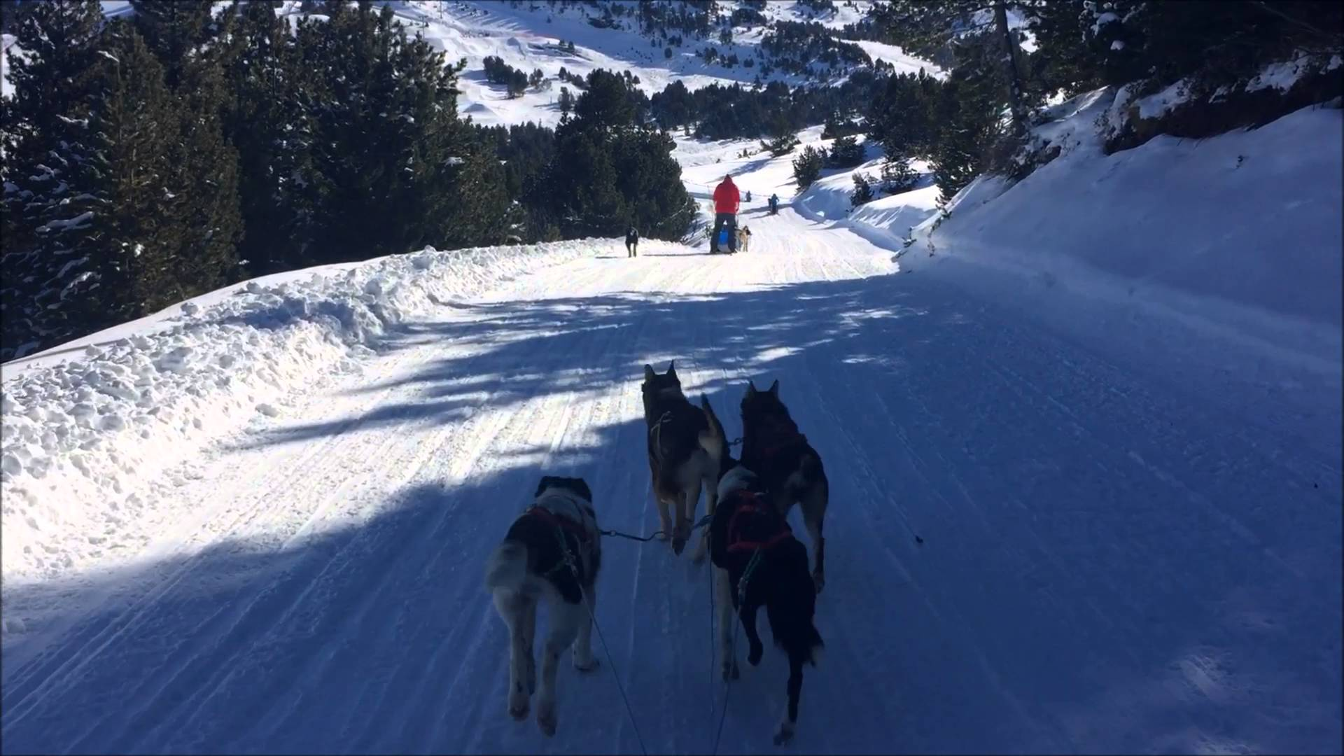 Dog Sledding in El Tarter, 21/01/2016